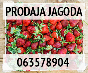 - Prodaja jagoda -